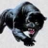 panther82coog05